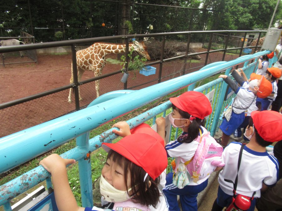 保護中: 野毛山動物園 遠足